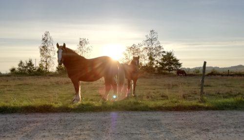 une jument et une pouliche au lever du soleil dans un champ